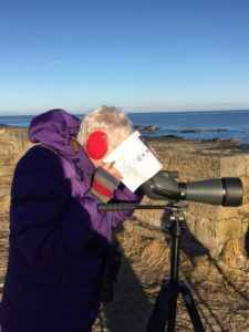 Fiona captured in a flagrant abuse of a Birding Ecosse Check list!