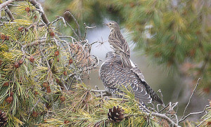 """Meadow Pipit thinks """"Where did we go wrong?"""""""