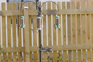Some of the Goldfinches at the new garden feeders.