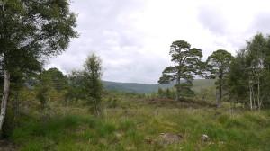 Some beautiful Scottish Scenery